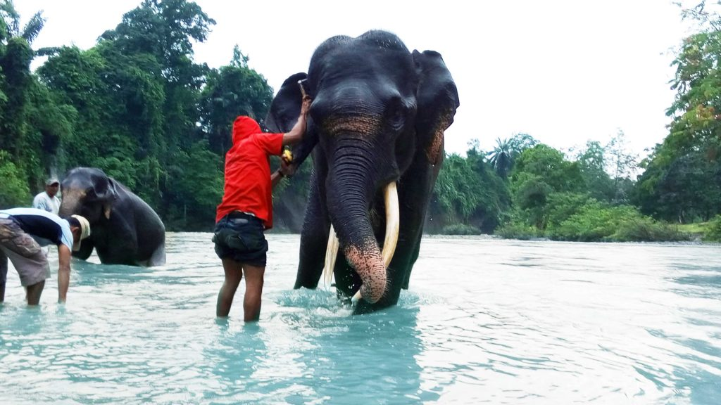 Memandikan gajah menjadi salah satu objek wisata menarik di Tangkahan
